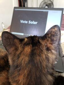 cat work laptop
